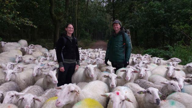 Steffie en Clemens tussen de schapen van Grebbeveld